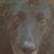Foto del perfil de Charly de Nanuk